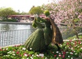 Bushes at disney - walt-disney-world photo