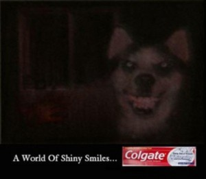 Smile.dog Colgate
