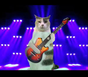 Cat гитара