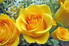 BEAUTIFUL バラ