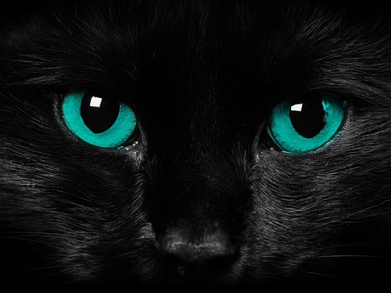 Black Cat Blue Eyes Wallpaper