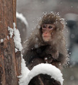 Monkey       - animals photo