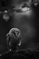 Owl             - animals photo