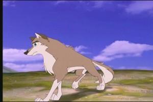 Aleu the wolf dog