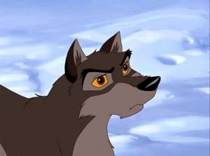 Balto wolf-dog