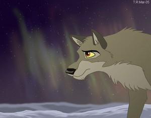 Awesome wolf-dog Balto