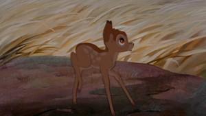 Bambi Screens