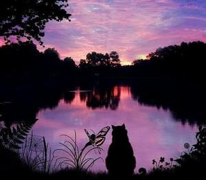 a cat staring at a lake