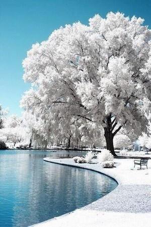 a snowy wonderland