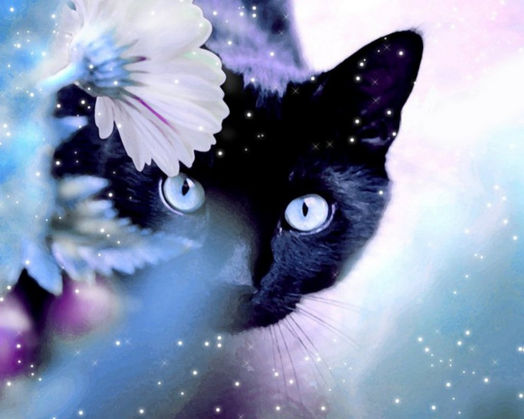 Gambar Cantik Imej Black Cat Wallpaper Hd Kertas Dinding And