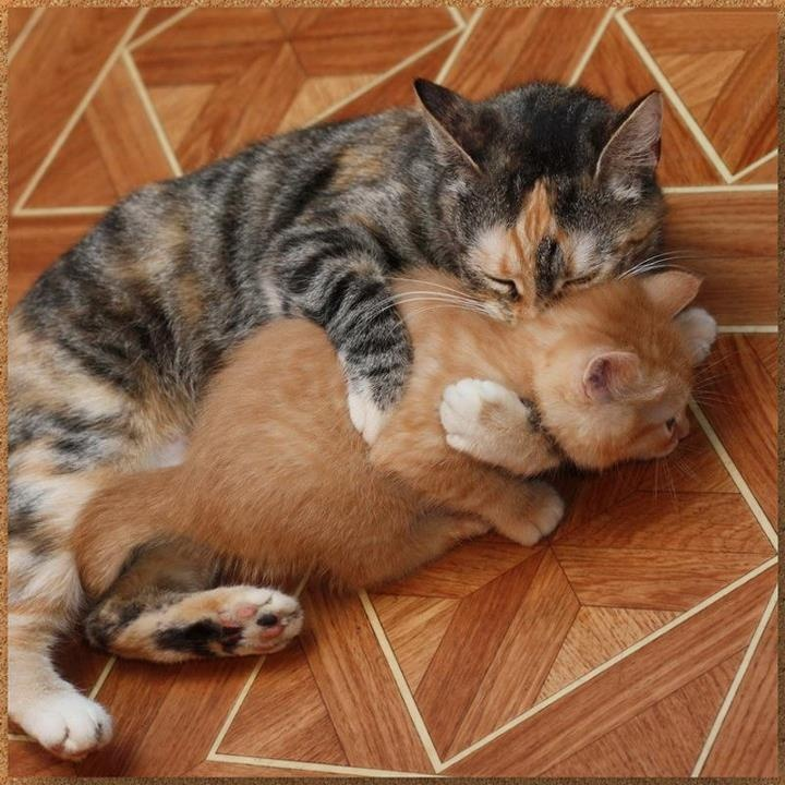 Kitty hugs images