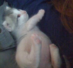 Angel, The Kitten