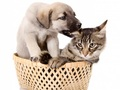cats - Cat and Dog  wallpaper