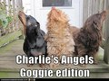 Dog Edition - charlies-angels-1976 photo