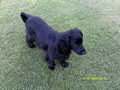 my dog Dougal