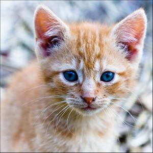 Firepaw - she-cat