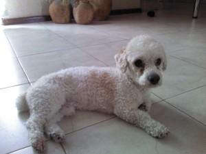 pelus, cute dog