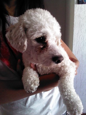 pelus,cute dog