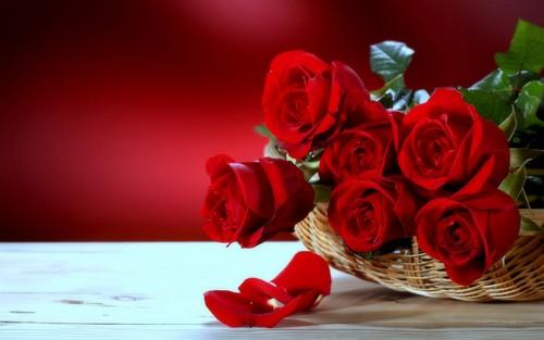 fleurs fond d'écran containing a bouquet, a rose, and a camellia entitled roses