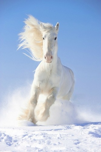 Horses wallpaper titled Dashing through the snow