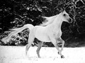 Dashing through the snow - horses photo