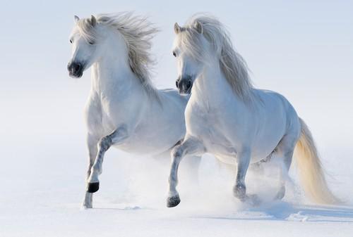 Horses wallpaper called Dashing through the snow