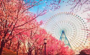 Beautiful Pics