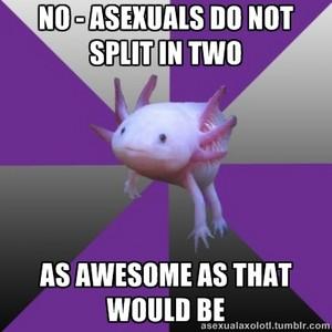 Asexual Axolotl