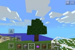 pohon ( oak )