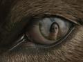 Bella's reflection in Jake's eye