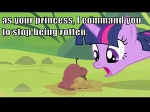 A Princess's Command