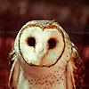 Owls icones