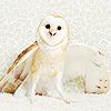 Owls iconos