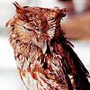 Owls ikon-ikon