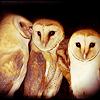 Owls ikoni
