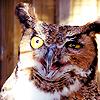 Owls ícones