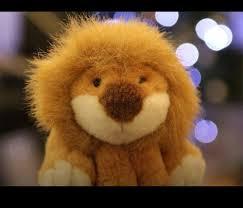 amazingphils lion