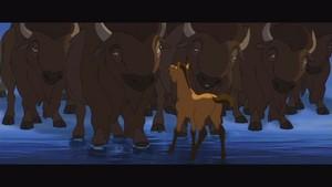 Spirit and the buffalo