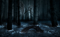 Dark forest  - the-vampire-diaries photo