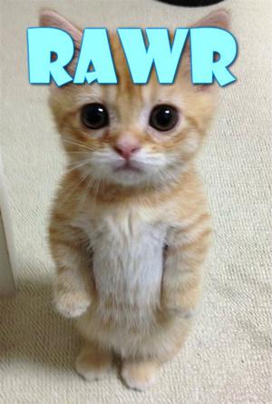 Tough kitten!