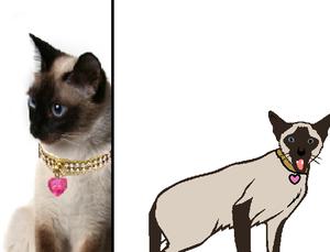 Eo (she-cat)