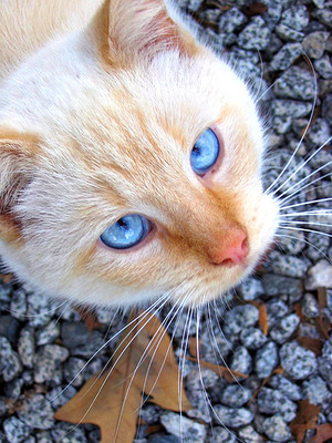 Lilyfall (she-cat)