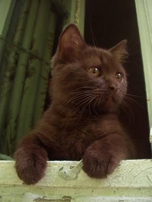 Ashfire (tomcat)