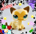 midnight star - littlest-pet-shop fan art
