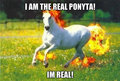 the real ponyta - pokemon fan art
