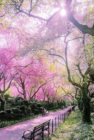 a pink beauty