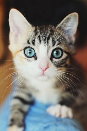 Beautiful kitten <3