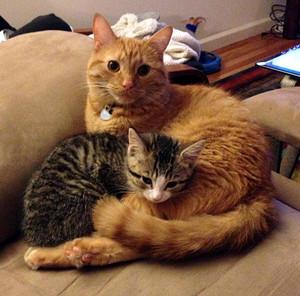 Samus and Chazz