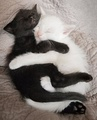 Ebony and Ivory - cats photo