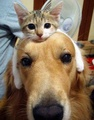 An Unusual Friendship - cats photo